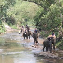 Eddy Chiang Mai Elephant Care