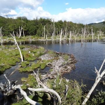Parque Nacional Tierra del Fuego (Argentine)