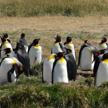 Parque Pingüino Rey (Chili)