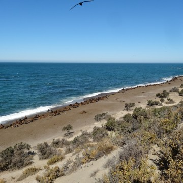 Área Natural Protegida Península Valdés