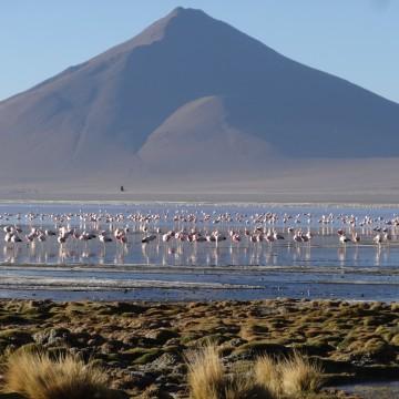Sur Lípez, Reserva Nacional de Fauna Andina Eduardo Avaroa & Salar de Uyuni 1