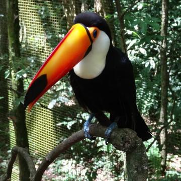 Parque das Aves – Foz Do Iguaçu (Brésil)