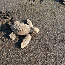 Refugio Nacional de Vida Silvestre Ostional – Área de Conservación Tempisque