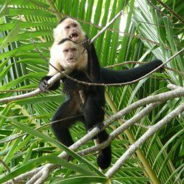 Parque Nacional Cahuita – Área de Conservación La Amistad Caribe