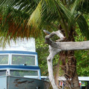 NicarAgua Dulce (tour operadora acuática) - Marina Cocibolca (Bahía de Asese)