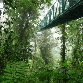 Reserva Bosque Nuboso Santa Elena – Área de Conservación Arenal Tempisque