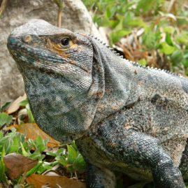 Refugio Nacional de Vida Silvestre Bahía Junquillal & Parque Nacional Santa Rosa – Área de Conservación Guanacaste