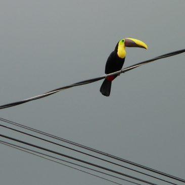 Sur les routes costariciennes 2